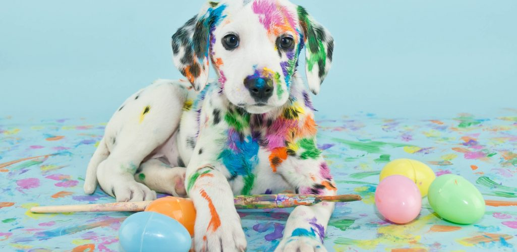 Dogs and Homeowners Insurance